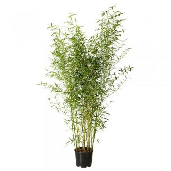 plante-naturelle